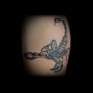 dave-calf-black-grey-scorpion